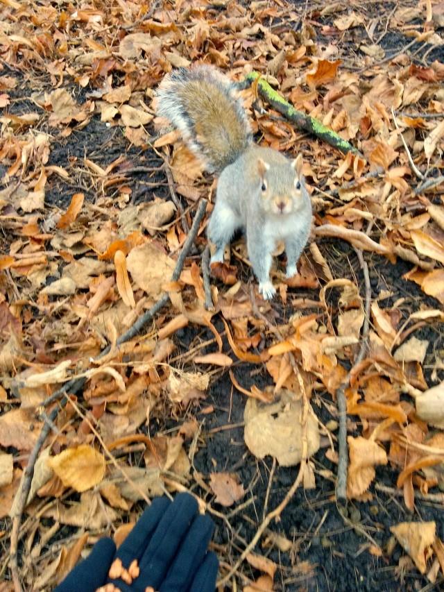 hydepark-écureuil